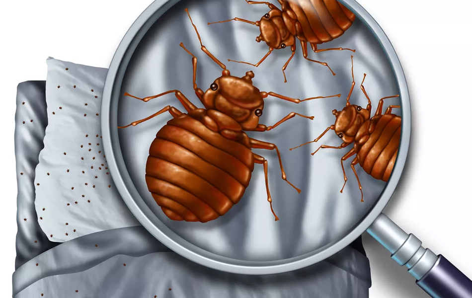 Port Washington bed bugs removal
